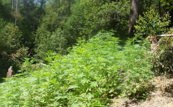 After Local Officials Decline To Investigate Oregon Marijuana Operation, Feds Step In