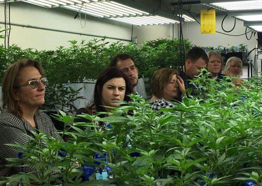 California Looks At Marijuana Legalization Lessons Learned From Colorado, Washington