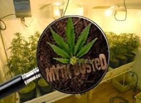 5 Cannabis Myths Busted!