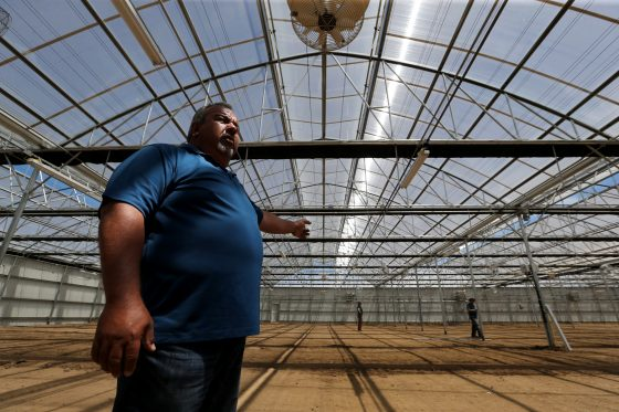 How The War On Drugs Crushed California Greenhouses And Cannabis Legalization Is Bringing Them Back