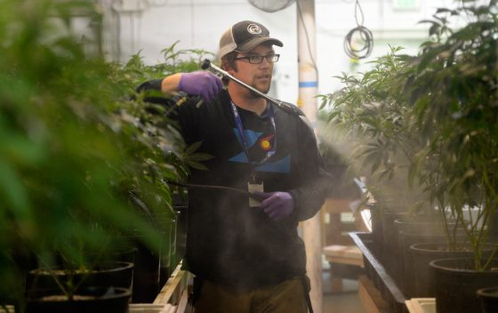 Insider: Only 15% Of California's Cannabis Growers Can Meet Strict New Standards