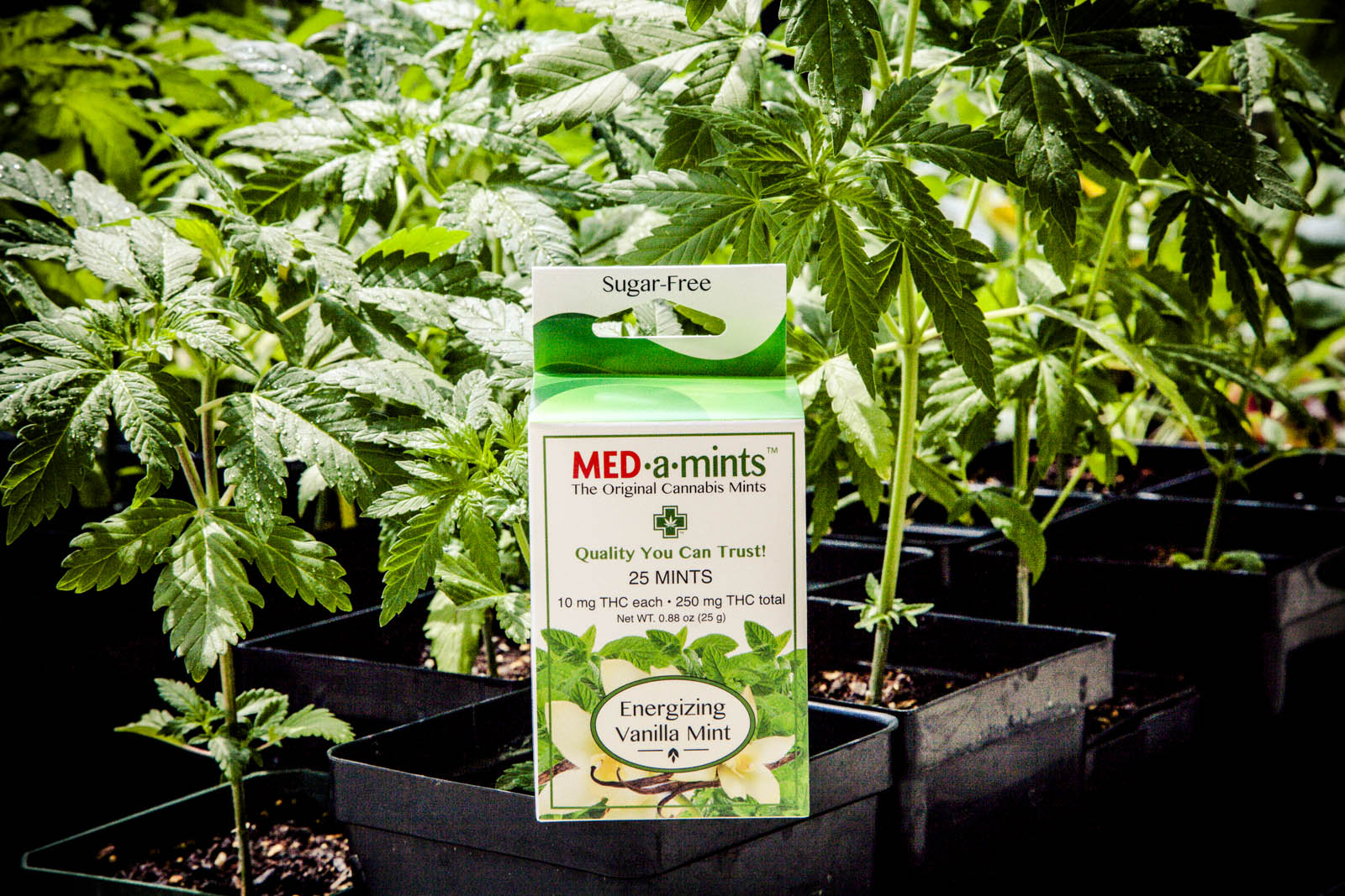 medamints-potent-thc-cannabis-marijuana-mints-023