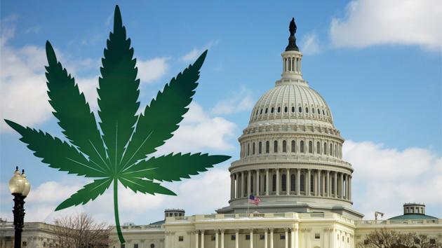 Washington Dc Legalizes Marijuana For Adults