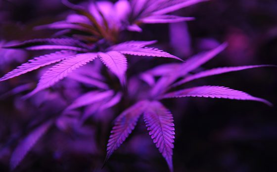 California Marijuana Legalization Might Have Its Greatest Impact Elsewhere