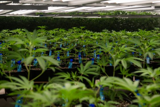 Aurora Says Yes To Recreational Pot Delivery In Colorado's Third-largest City