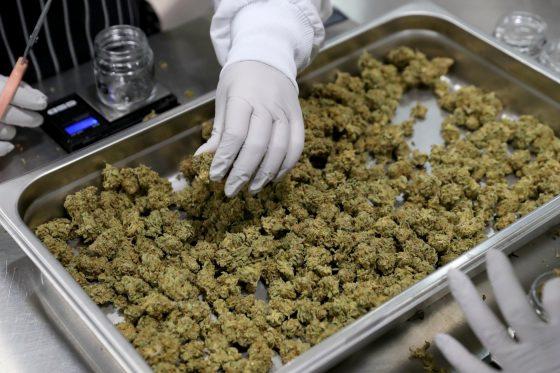 Cannabis Dispensaries Are 'essential' Businesses In San Jose During Coronavirus Lockdown, City Says