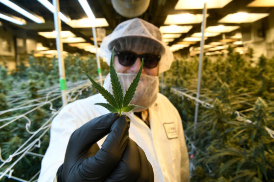 Colorado Marijuana Sales Hit $2.2 Billion In Highest-selling Year Yet