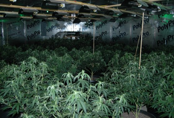 Family-run Plumbing Business Was Front For Illegal Marijuana Grow Op In Massachusetts