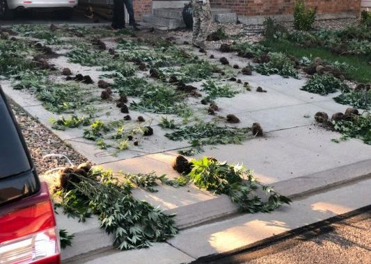 FBI, DEA Orchestrate Massive Raid Of Suspected Illegal Marijuana Grow Operations Across Denver Metro Area
