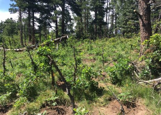 Federal Agencies Removed More Than 71,000 Marijuana Plants From Colorado Public Lands In 2017