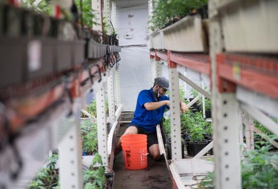 Growing Weed Has A Bad Rap For Harming The Environment. Some Growers Are Trying To Change That