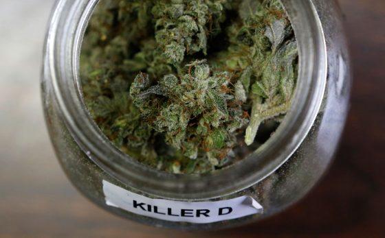 Maine Marijuana Referendum Campaign Intensifies, New Pro-pot TV Ads Launch