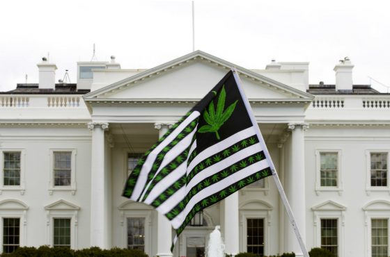 Analysis: Here's What America Would Be Like With Marijuana Legalization