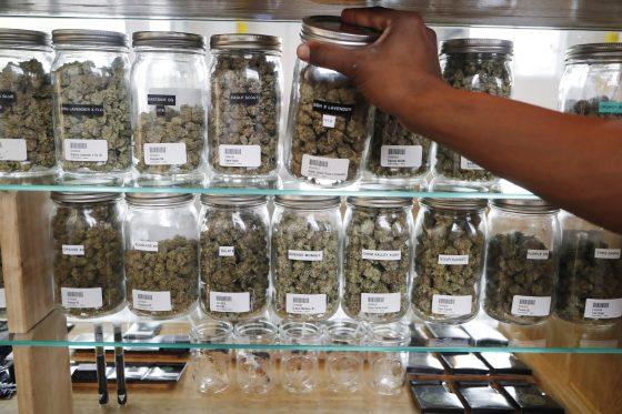 Michigan, North Dakota Weigh Bringing Legal Marijuana To Midwest