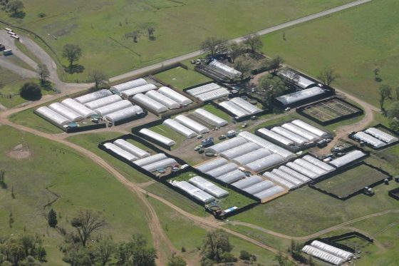 Search For Missing San Jose Man Leads To Raid Of Marijuana Farm
