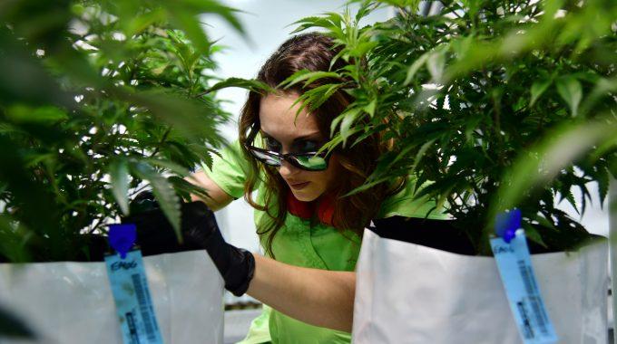 Sen. Cory Gardner Fails To Get Marijuana Reform Into Criminal Justice Bill