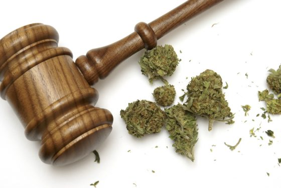 The Feds Seized Guns, Gold And 320 Pot Plants. So Why Did A Judge Rule They Can't Pursue Marijuana Charges?