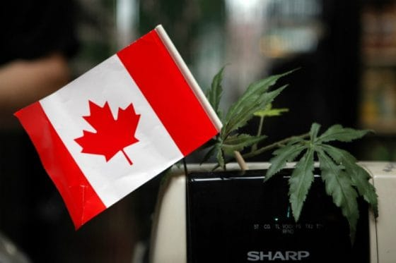 Will Canada Ban Marijuana Use And Cultivation In Rental Units?