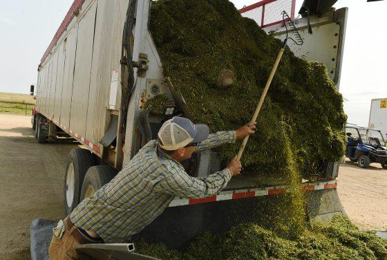 Will Missouri Legalize Industrial Hemp This Year?